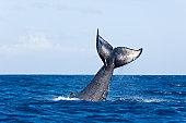 Whail-tail-fluke