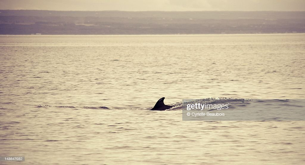 Whale : Stock Photo