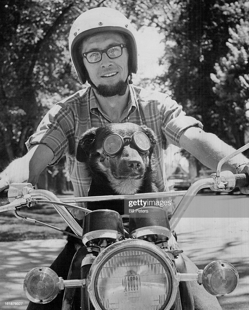 AUG 6 1970, AUG 7 1970; What A Way To Go; Tyne, a 3-year-oldn Collie-Labrador retriever, won't be riding around on Ron Meyer's motorcycle like this, at least until Oct. 5. That's when Meyer, 30, of 2908 S. Cherokee St., is slated to appear in Denver County Court on charges of careless driving for allowing Tyne to ride with him on the motorcycle. The dog has been doing this sort of thing for two years, travelling as far as Cape. Kennedy, Fla., and Chicago, III. Goggles protect his eyes.;