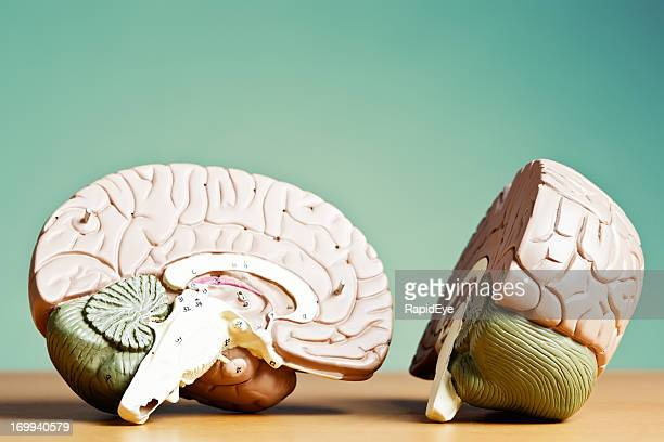 What's on your mind? Model brain split in two