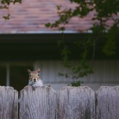 What's up, neighbor?