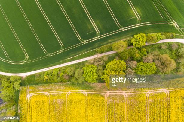 Wheat and canola fields in spring - aerial view