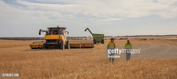 Wheat being harvested with two people walking near the headers Near Penong Nullarbor Plain South Australia Australia