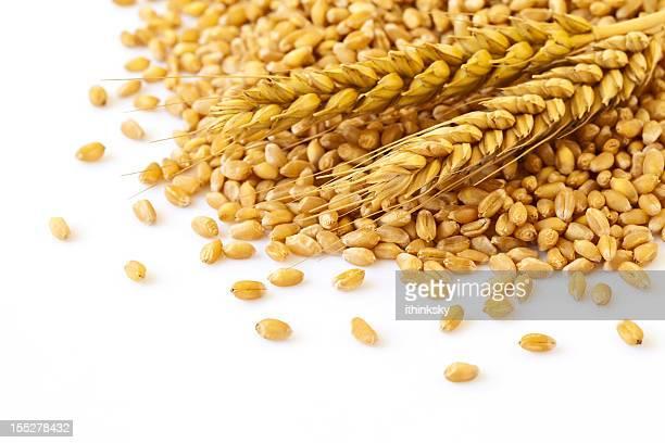 Weizen-Ohren und Samen