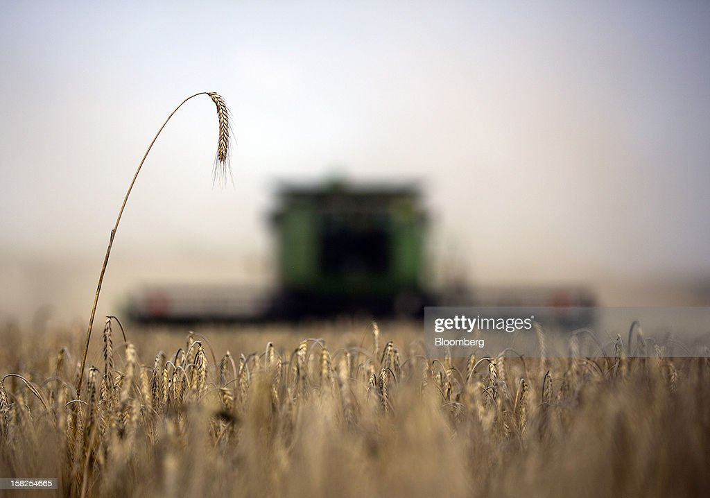 'BEST PHOTOS OF 2012' (): Wheat ears stand before harvesting by a Deere & Co. combine harvester on a farm operated by ZAO Kavkaz near Kurganinsk in Krasnodar, Russia, on Saturday, July 14, 2012. Russia's wheat crop is estimated at 45 million metric tons, with exports at 14 million to 17 million tons, Agriculture Minister Nikolai Fedorov said. Photographer: Andrey Rudakov/Bloomberg via Getty Images