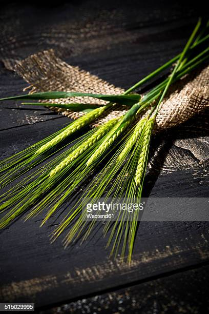 Wheat ears, Triticum sativum, on jute