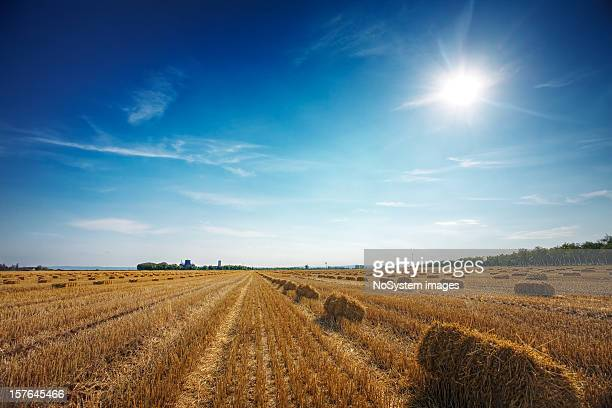 Weizen Feld nach der Ernte