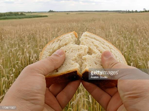 wheat field and bread