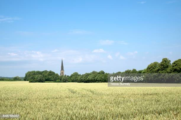 Wheat field and church in Wentworth village on 6 July 2017 in South Yorkshire United Kingdom