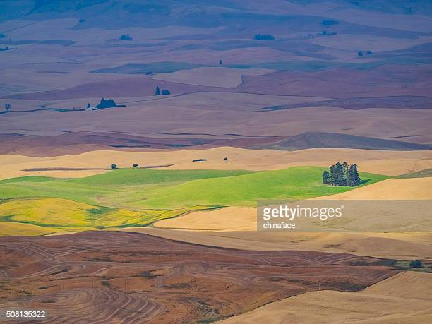 Campo di grano in autunno, Palouse, Washington, STATI UNITI D'AMERICA