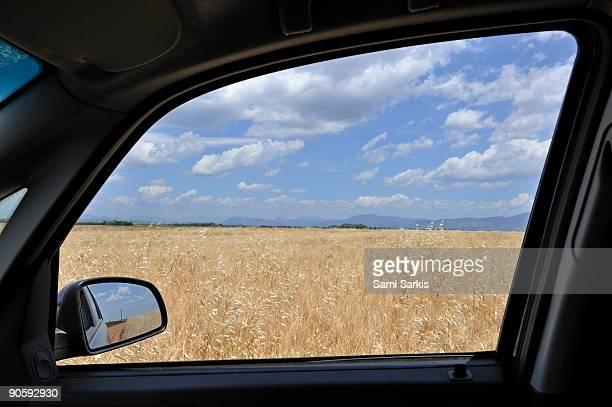 Wheat field in spring by a car window