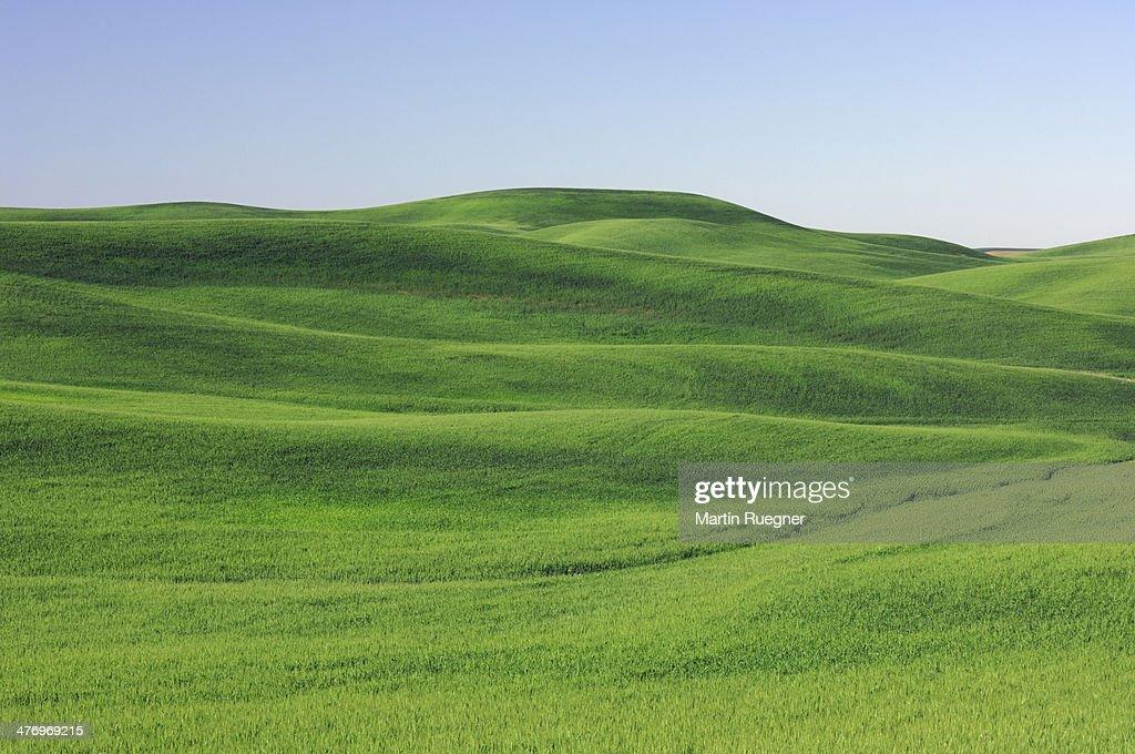 Wheat field in the Palouse Region