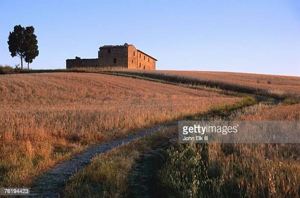 Wheat field surrounding road leading to farmhouse, So of Pienza, Val d'Orcia, Tuscany, Italy, Europe