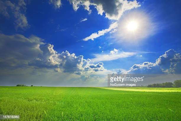 小麦のフィールドに嵐の空と太陽