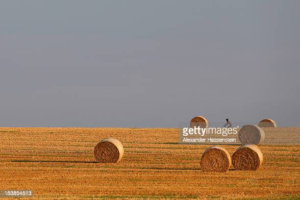 GERMANY A wheat field with straw bales is pictured on September 2 2012 in Bad Neustadt Germany