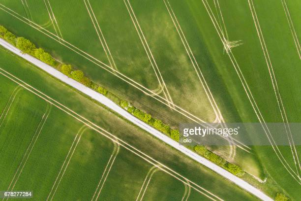 Wheat fields in spring - aerial view