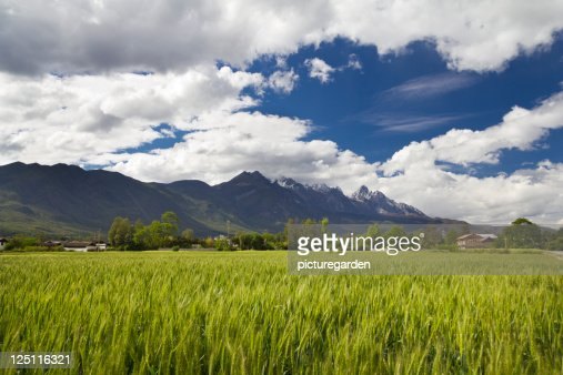 Wheat Fields in Valley : Stock Photo