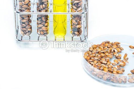 Wheat Genetically Modified Plant Cell Stock Photo | Thinkstock