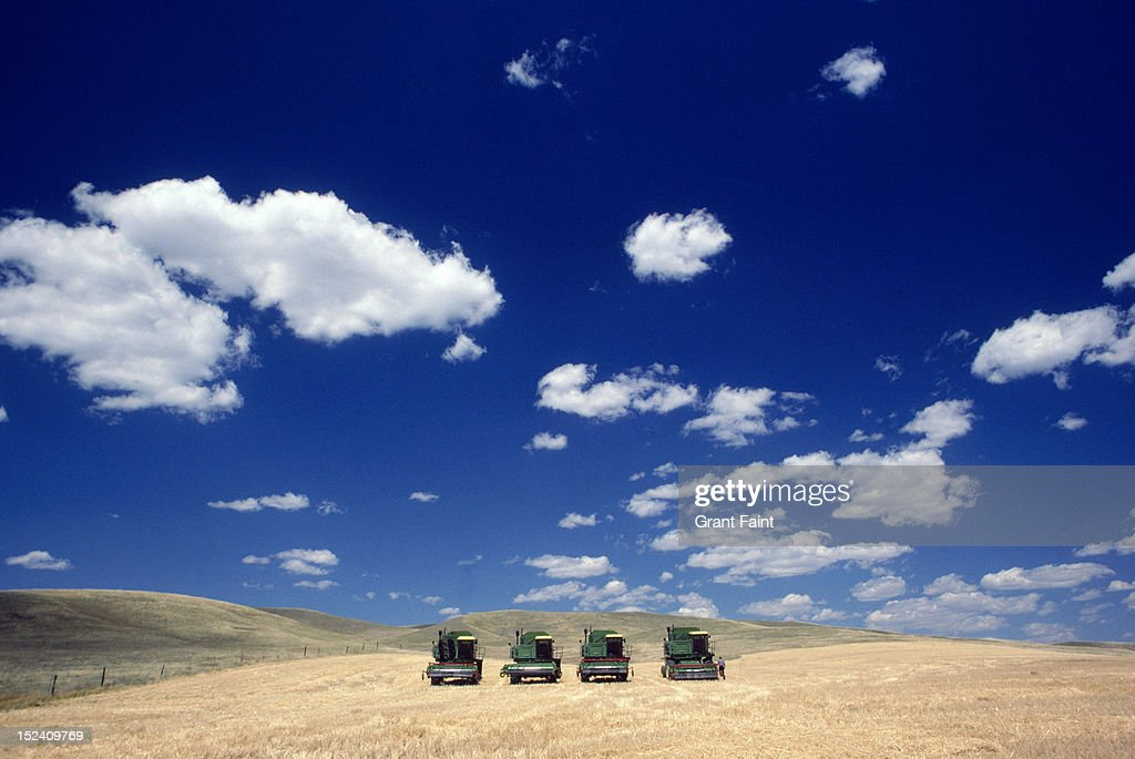 Wheat harvesters in field. : Stock Photo