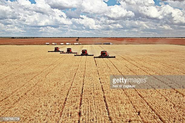 Wheat havest