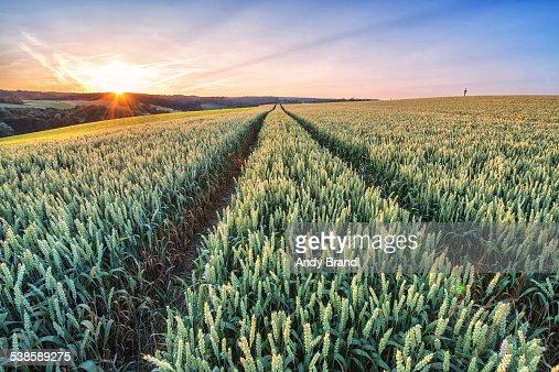 Wheat in HD