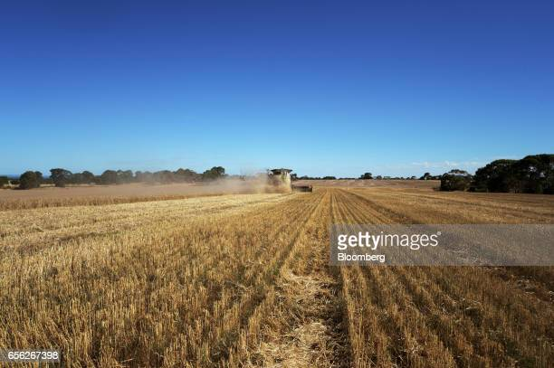 Wheat is harvested with a combine harvester at a farm near Drysdale Australia on Wednesday Feb 15 2017 Wheat shipments from Australia may decline...