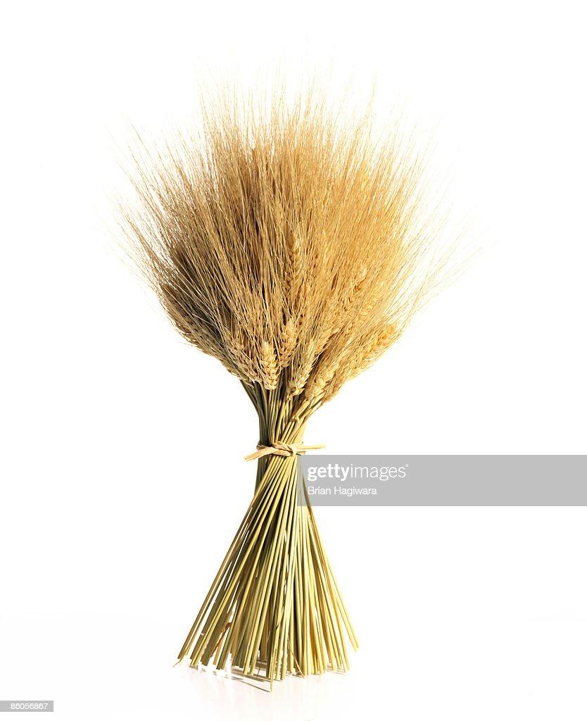 Wheat on white : Stock Photo