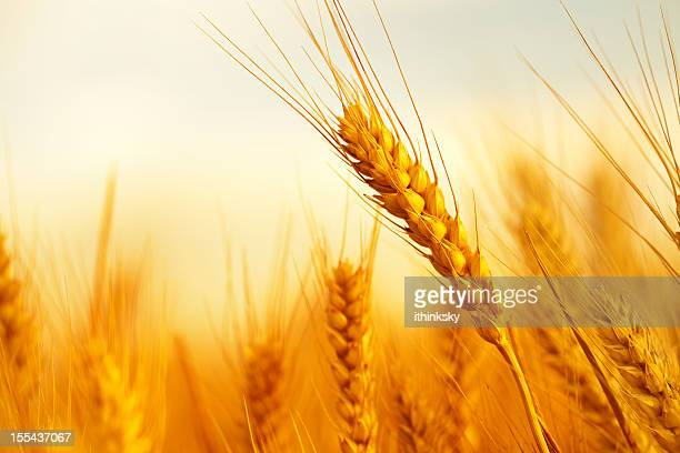 Di grano