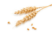Wheat stems isolated on white.