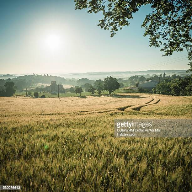 Wheatfields at sunrise, Prades, Midi Pyrenees, France