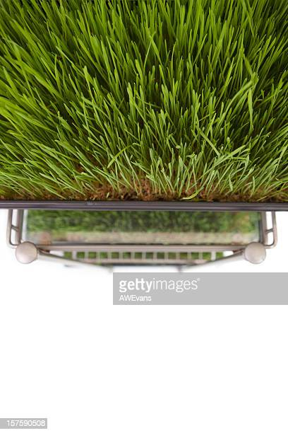 Wheatgrass rack