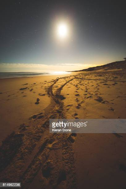 Wheel and Foot Tracks Along a Sandy Beach at Sunset