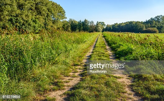 Wheel tracks in a rural area on an early morning : Stock Photo