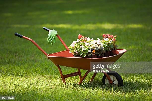 Wheelbarrow of plants