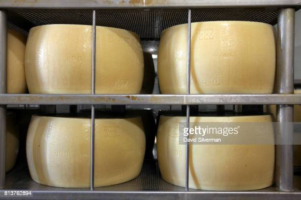 Wheels of threedayold ParmigianoReggiano cheese their distinctive markings slightly noticeable at this young age sit on perforated stainlesssteel...