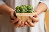 Cropped shot of a person holding a container full of fresh brussel sproutshttp://195.154.178.81/DATA/i_collage/pu/shoots/806058.jpg