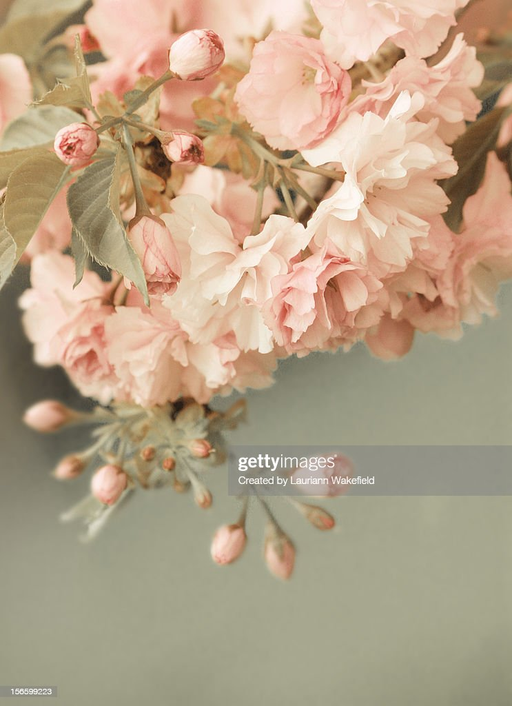 When Spring Comes : Stock Photo