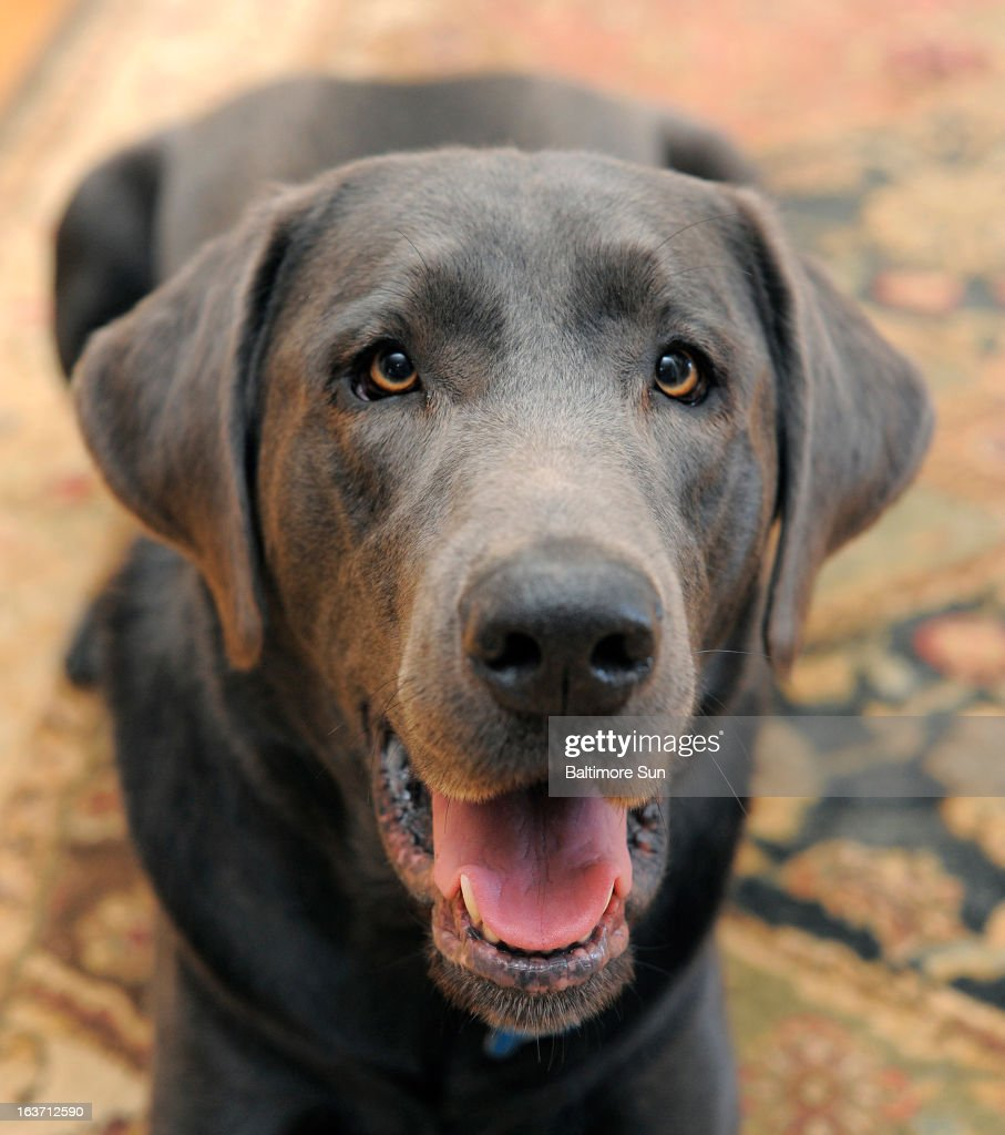 When told her dog Ace would need cosmetic surgery, Jennifer Scaturro of Arnold, Maryland, was surprised. But the surgery for an inturned eyelid stopped Ace from having cotinually watery eyes and rubbing his eyes with the back of his paws.