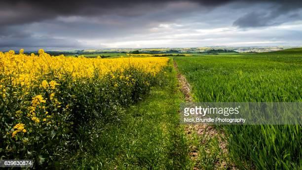 Where Two Fields Meet