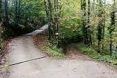 which patch? The forked road with fallen leaves in the forest. The abstract concept of decision, divergence, choice and option. A paved and bright road, another muddy and gloomy. The Road Not Taken
