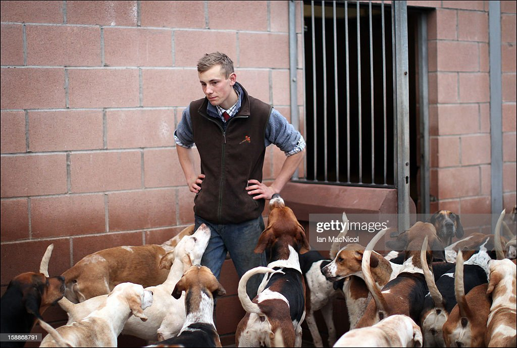 Whipper In, Johnny Richardson with some of The Duke of Buccleugh's Fox hounds which he looks after on November 09, 2011 in St Boswells, Scotland.
