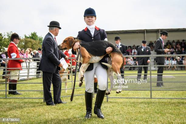 A whipperin carries an Old English hound from the presentation ring at the Festival of Hunting on July 19 2017 in Peterborough England Now in it's...