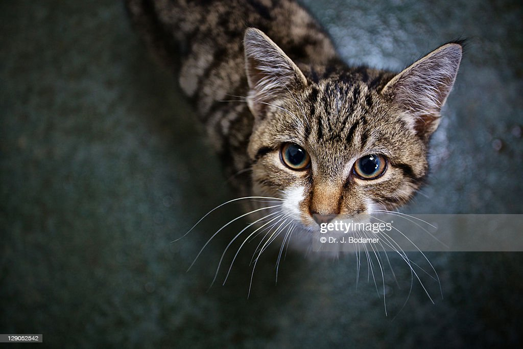 Whiskers of cat : Stock Photo