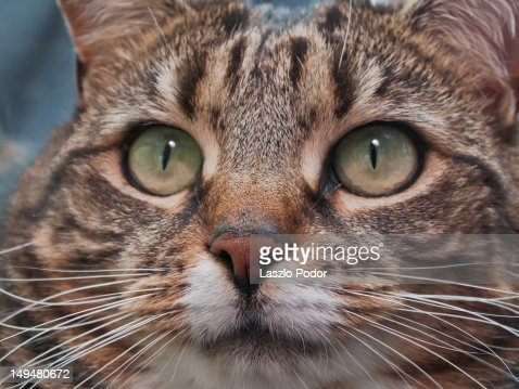 Whiskers : Stock Photo