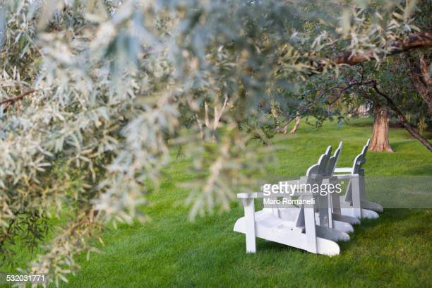 White adirondack chairs under tree