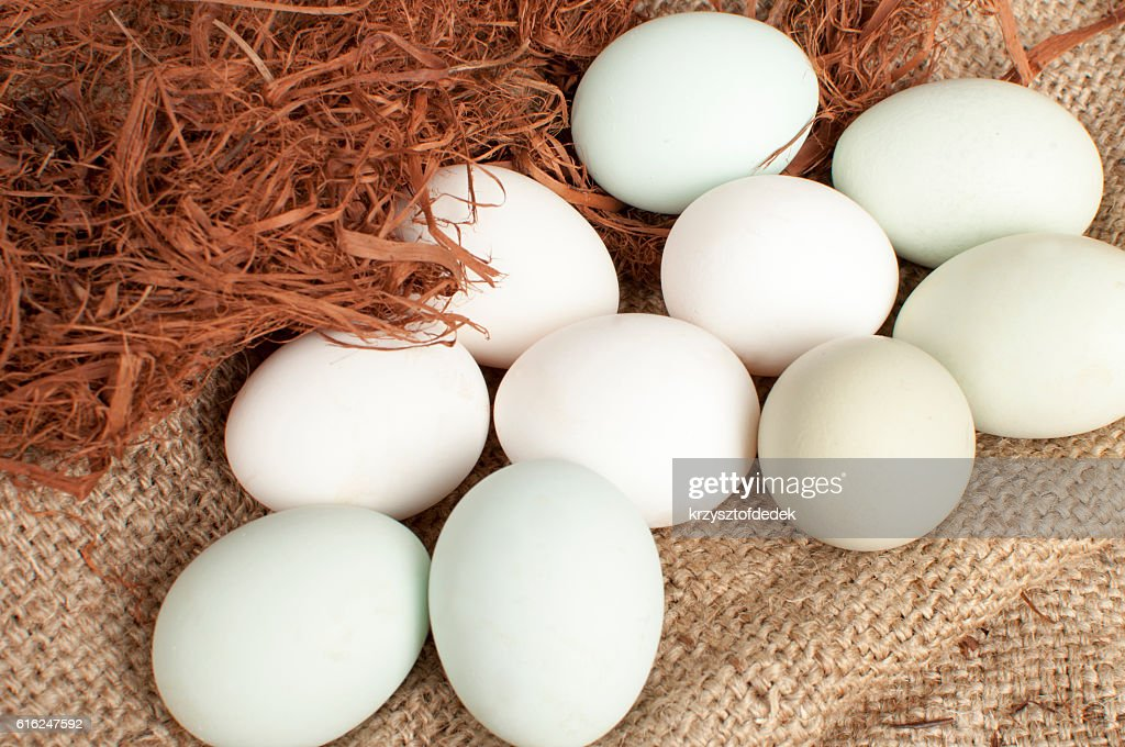 e branco verde de ovos : Foto de stock