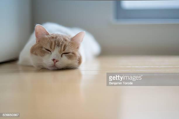 White and beige cat lying on floor