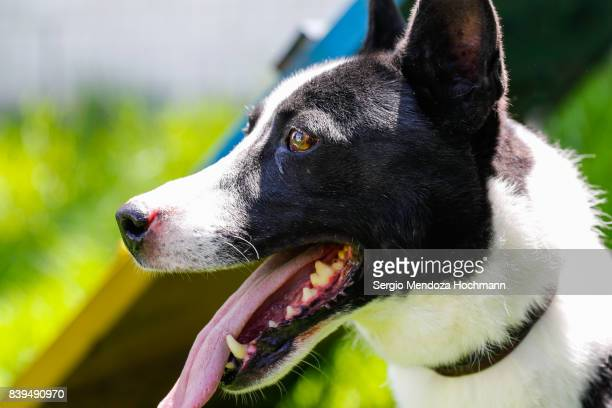 A white and black dog looking happy in a dog shelter in Mexico City