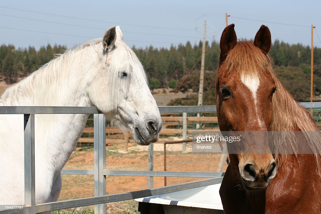 White and brown horse : Stock Photo