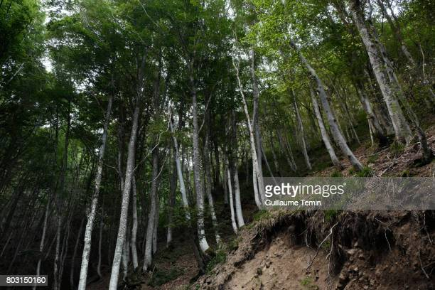 White and Green Forest